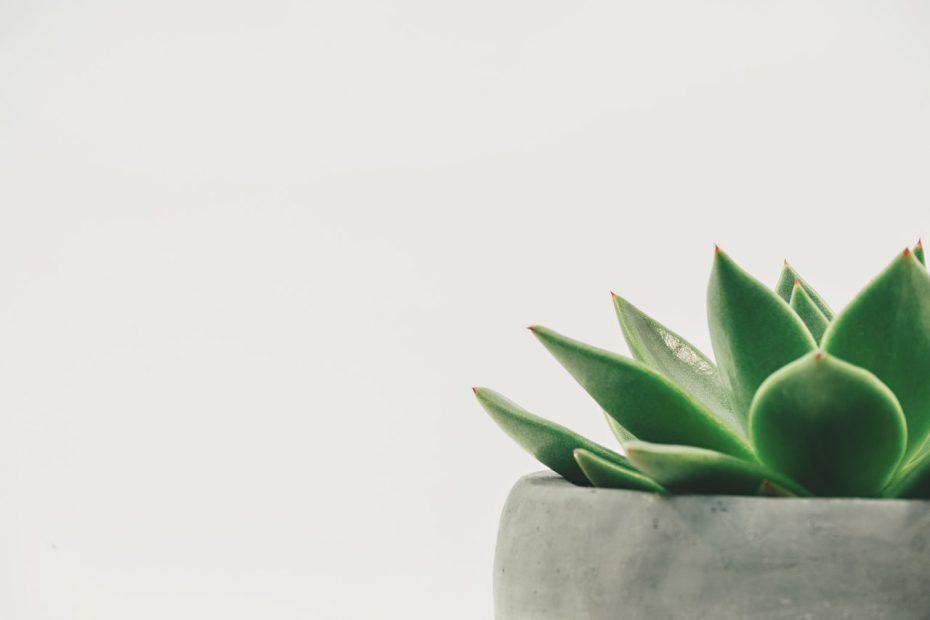 Quelles plantes dans un bureau ?
